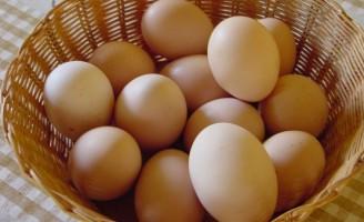 Pequenas propriedades podem ser boas produtoras de ovos