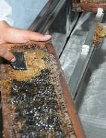 Incentivo à produção de mel no sertão pernambucano