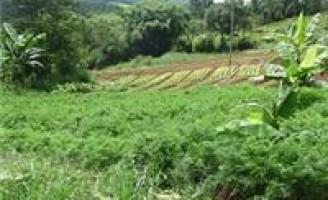 Incentivos devem ampliar o mercado de produtos orgânicos no Vale do São Francisco