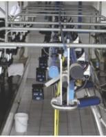 Cuidados  para se produzir um leite de qualidade