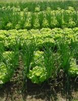 Nordeste é a região com maior número de produtores orgânicos do país