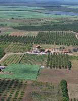 Sai o balanço das exportações de frutas do perímetro irrigado do São Francisco em 2014
