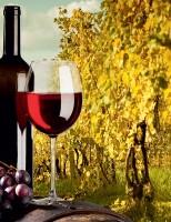 O vinho além do óbvio! <br><br>  Fernando Tony
