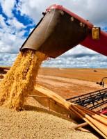 Brasil pode ter uma nova safra recorde de grãos