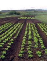 As sementes de hortaliças com a marca do Brasil