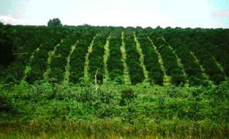 Apesar da crise o Valor da produção agropecuária cresceu 1% em relação a 2014