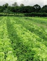 Mercado brasileiro de orgânicos pode crescer até 30% ano que vem