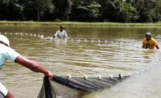 Governo aperta o setor pesqueiro e vai recadastrar pescadores