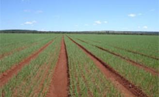 Brasil tem o mais alto Valor da Produção Agropecuária dos últimos anos