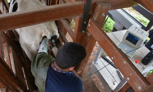 """<h2><a href=""""https://nordesterural.com.br/nova-tecnica-de-inseminacao-melhora-o-nivel-de-prenhez-de-vacas/"""">Nova técnica de inseminação melhora o nível de prenhez de vacas</a></h2>A nova técnica é chamada de inseminação Artificial em Tempo fixo – IATF – em Blocos,foi desenvolvida pelos pesquisadores da Embrapa Rondônia. A nova técnica feita em Blocos resultou em"""