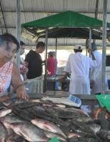A Feira do Peixe Vivo em Alagoas vai comercializar 10 toneladas de pescado