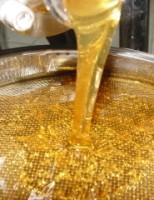 Comunidades rurais de sete estados garantem rende produzindo mel