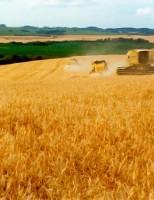 Investimento em novas regiões produtoras fariam o Brasil autossuficiente em trigo