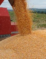 Produção brasileira de milho cresce 38% na safra 2016/17