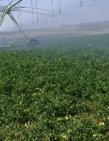 Atualizado o valor da produção agrícola para este ano