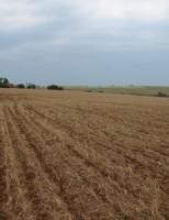 Culturas do verão e plantios de frutas serão beneficiados com recursos de R$ 100 milhões para o seguro rural
