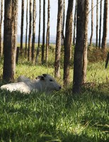 Nova pesquisa assegura: sombra no pasto não favorece o aumento da verminose no rebanho de corte