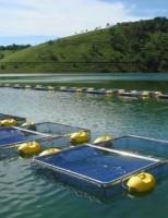 A criação de peixes em gaiolas favorece a renda do produtor rural