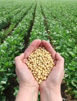 Produtividade da soja no Brasil deve alcançar crescimento de mais de 80%