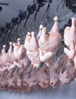Exportação brasileira de carne de frango sofre uma redução
