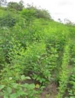 Orientações para o agricultor recuperar as florestas e salvas o meio ambiente