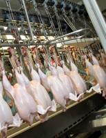 Exportação brasileira de carne de frango em novembro