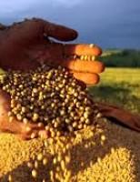 Novos valores para o Valor da Produção da Agropecuária brasileira