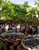 Um festival vai homenagear mais uma vez o Vinho Madeira