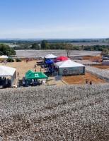 A produção de algodão em Minas Gerais deve crescer mais de 50% em 2019