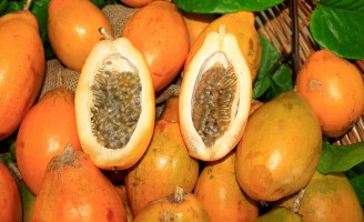 Nova semente de maracujá ganha mercado de frutas especiais e a fruta é vendida pelo dobro do preço