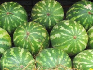 melancia - junta