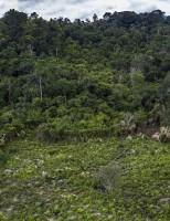 A regeneração das florestas de forma natural está acontecendo mais lentamente