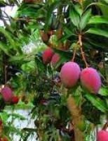 O valioso mercado brasileiro de frutas