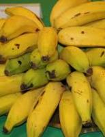 Banana, um dos alimentos mais importantes do mundo