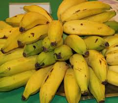 banana em cachos