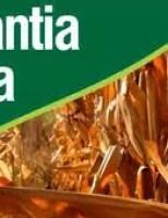 Trinta e dois mil agricultores que sofreram perdas na safra serão beneficiados com o Garantia-Safra