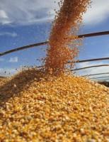 Recorde na exportação de milho impulsiona crescimento no agronegócio