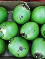 Quero comprar coco verde