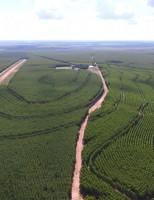 Crescimento na produção de etanol de milho vai promover aumento no plantio de florestas no Brasil