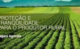 Perdas na safra de milho do Rio Grande do Sul mostra crescimento nos pedidos de seguro rural