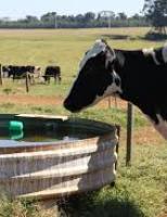 A pecuária pode ser mais rentável com um bom controle do uso da água na propriedade