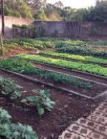 Orientações para um controle biológico de pragas em hortaliças