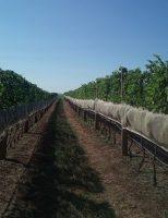 Estudos confirmam uma nova região produtora de vinhos no Brasil