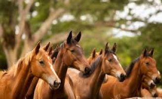 Criação de equinos exige protocolo sanitário para garantir mais qualidade na tropa