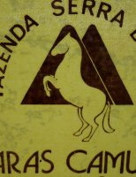 Haras Camuana – O cavalo Paint Horse