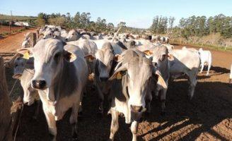 Embrapa divulga estudo inédito sobre tendências para a cadeia de carne bovina