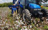 Colheitadeira móvel de algodão é testada para beneficiar agricultores familiares do Brasil