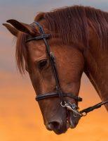 Cuidados com as feridas em cavalos para evitar outras doenças