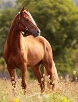 O criador pode identificar os problemas dos cavalos pelo comportamento deles