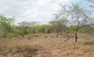 Tecnologias que vão ajudar a combater a desertificação no bioma Caatinga